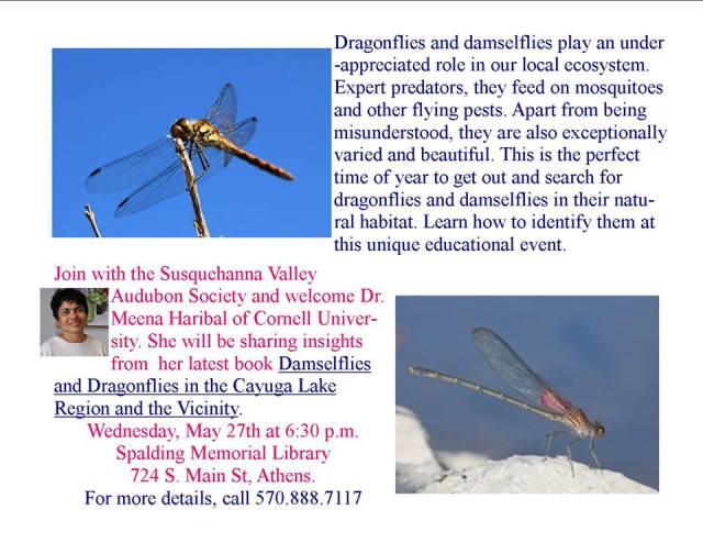 dragonflies with meena